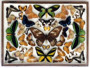 Pinned insect draw - case no. 6