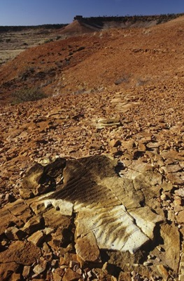 Outcrop of the Winton Formation near Diamantina National Park